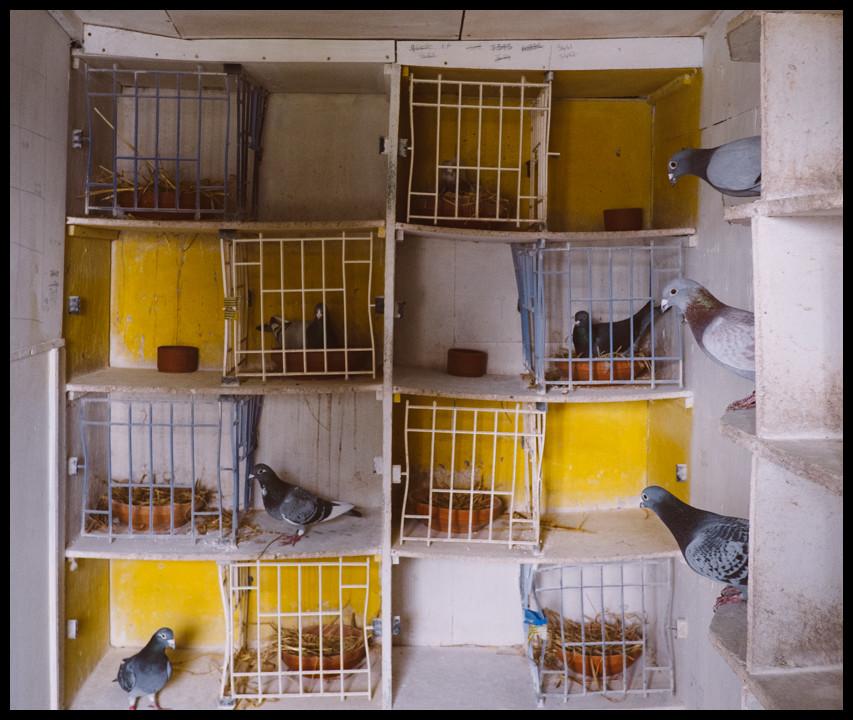Pigeon loft, Springholm.